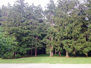 TreesAlongRiver